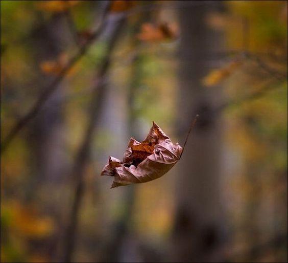 11º Dia – folhassecas